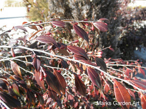 Plants-in-Winter_04.JPG