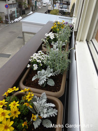 Window_box.JPG