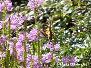 Wildlife_Butterflies_01.JPG