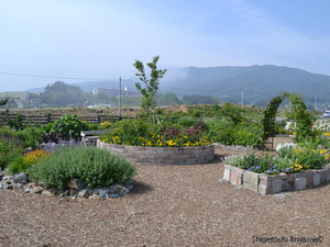 Pic_Garden-of-Hope_04.JPG