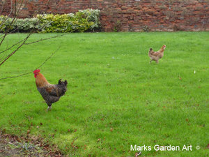 Wildlife_Chickens_04.jpg
